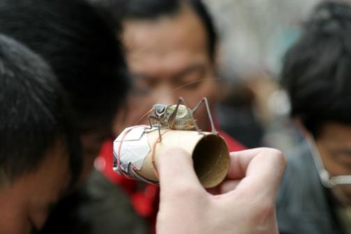 crickets2