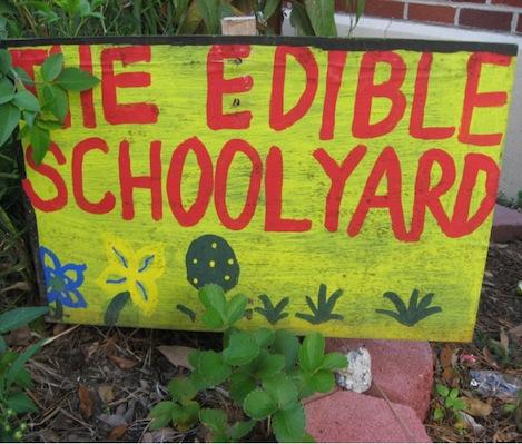 Edible SY